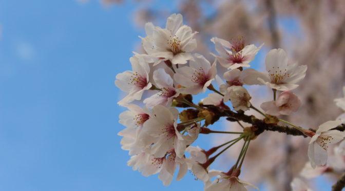 ワクワク、春。